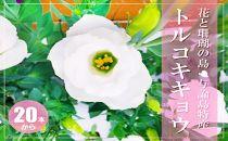 【冬春発送】与論島のトルコキキョウ【白色系】20本以上