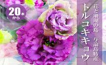 【冬春発送】与論島のトルコキキョウ【紫色系】20本以上
