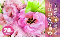 【冬春発送】与論島のトルコキキョウ【ピンク色系】20本以上