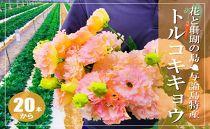 【冬春発送】与論島のトルコキキョウ【オレンジ色系】約20本