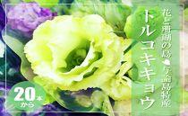 【冬春発送】与論島のトルコキキョウ【緑色系】20本以上