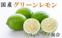 ■【産直】和歌山産グリーンレモン約3kg(サイズ混合)