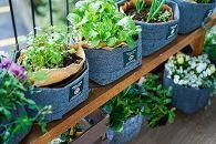 3週間のコンポスト体験と野菜栽培がでいるLFCガーデニングセット