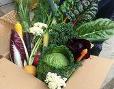 ★11/15より受付★福岡市内で栽培された国産の珍しいヨーロッパ野菜