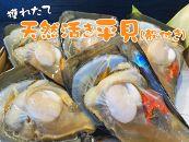 【愛知県産】天然活き平貝(殻付き) 5枚セット