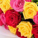 花のまちから愛を込めて!バラ切り花22本【バラ園直送】