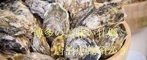 ★2020/10/1~受付★唐泊恵比須かき2k