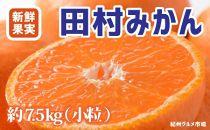 田村みかん 人気の小粒(2S~3S)約7.5kg 紀州グルメ市場【数量限定】