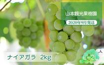 フルーツ王国余市産「ナイアガラ」2kg【山本観光果樹園】