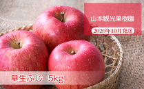 フルーツ王国余市産「早生ふじ」5kg【山本観光果樹園】