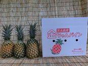★先行予約受付開始★宮古島産ボゴールパイン3個セット