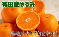 【厳選・濃厚】紀州有田産のはるみ約4kg(サイズおまかせ)