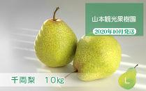 フルーツ王国余市産「千両梨」10kg【山本観光果樹園】