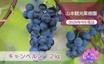 フルーツ王国余市産「キャンベルス」2kg【山本観光果樹園】