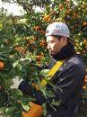 ■和歌山産有田みかん5kg【家庭用】[2020年11月~発送]
