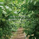 国産有機栽培グァバ葉100%使用土佐國グァバ茶(2g×10包)