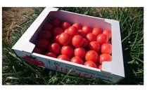 【産地直送新鮮野菜】南国市ブランドトマト「土佐まほろばトマト」詰め合わせセット4kg【高知県産野菜】