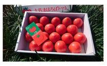 【産地直送新鮮野菜】ブランドトマト「土佐まほろばトマト」フルーツトマトセット1.5~2kg【高知県産】