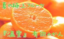 濃厚温室有田みかん 秀品 12~15玉入り 化粧箱入り