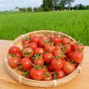 ミニトマト詰め合わせ×2箱