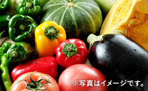 「ベジーズ館」の夏・冬野菜 年2回コース(7月と12月発送)【たっぷりセット】