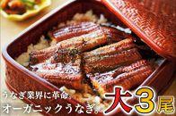 「泰正オーガニック(横山さんの鰻)~生産者直送~ 大3尾」