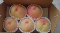 ★7月中旬発送予定★「桃の女王!」清水白桃約2kg(4~6玉前後)