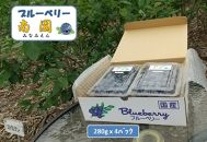 ブルーベリー大粒完熟生果:<6~8月限定出荷> 【ブルーベリー南園】
