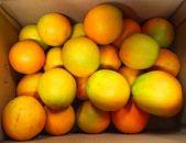 秀品希少な国産バレンシアオレンジ5kg