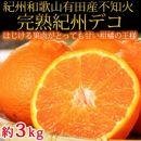 果肉プリプリ♪完熟紀州デコ(不知火)約3kg