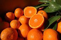 【完熟濃厚】甘みと酸味の良バランス!完熟有田みかん10kgご家庭用