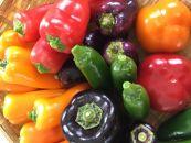 【2021年7月~3回便】★低農薬使用★旬な新鮮野菜直送!