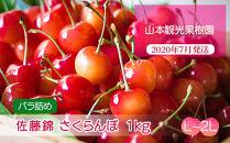 フルーツ王国余市産佐藤錦(L~2L バラ詰め)500g×2【山本観光果樹園】
