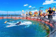 マンタやサメの飼育観察体験ツアー※3名様