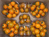 採れたてミニトマト【オレンジ千果(オレンジチカ)】1.5kg×2ケース≪収穫当日~翌日発送≫