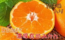 【農家直送】濃厚有田みかん 10kg