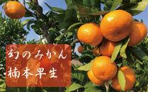 【先行予約10kg入り】レア品種楠本早生有田みかん【11月中頃到着】