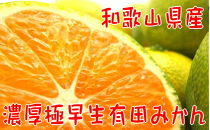 【2021年10月発送】【秋の美味】【農家直送】濃厚極早生有田みかん(ご家庭用)6.5kg