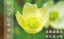 利尻富士町【町の花・リシリヒナゲシ】花の種
