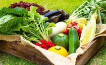 〔夏のギフト〕<畑から直送>季節のお野菜セット