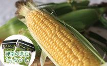 【期間限定】生でも食べられる津南町のスイートコーン10本と茶豆1kgのセット