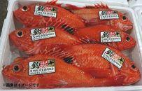 【数量限定】冷凍釣きんき<網走産>3尾セット(約400g前後×3尾)