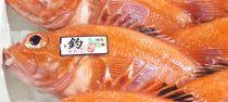 【数量限定】<網走産>高級ブランド≪活〆釣きんき≫【500g×1尾】