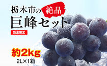 【2020年夏発送分先行受付/数量限定】栃木市の絶品巨峰セット