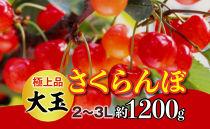 【令和3年 先行予約】極上品大玉・さくらんぼ(2段並べ2~3L約1200g)