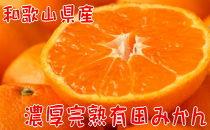 【12月発送】【数量限定】濃厚完熟有田みかん(ご家庭用)たっぷり6.5kg