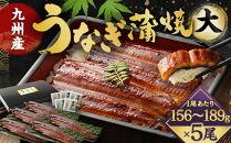 FY13-24九州産うなぎ蒲焼大5尾(1尾あたり156~189g)