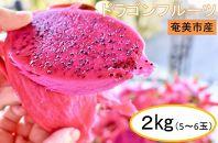 南国ならでは☆奄美のドラゴンフルーツ