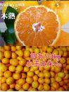 【自宅用】大ちゃんの畑農園木成り完熟有田みかん3kg(小玉ちゃん)