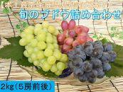 旬のブドウ味くらべ2キロ【数量・期間限定】